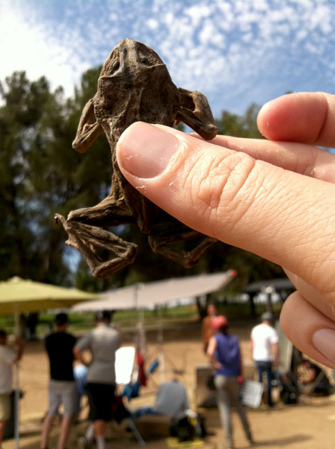 dried frog on set
